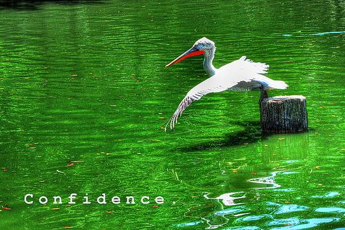 confidence - by badzmanaois via Flickr