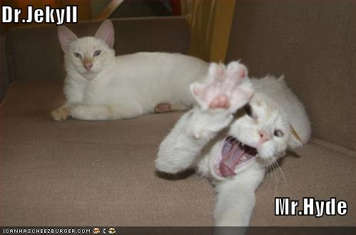funny-pictures-dr-jekyll-and-mr-hyde-as-cats