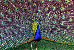 Ostentatious Avidity - by rappensuncle via Flickr