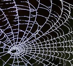 web project management - by foxypar4 via Flickr